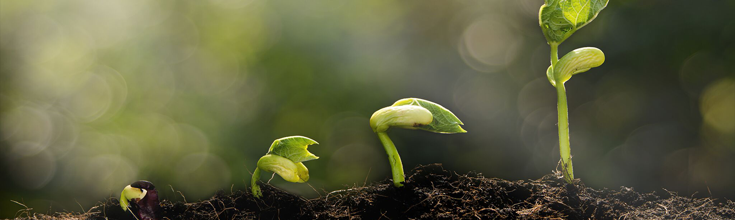 growing plants- growing investments